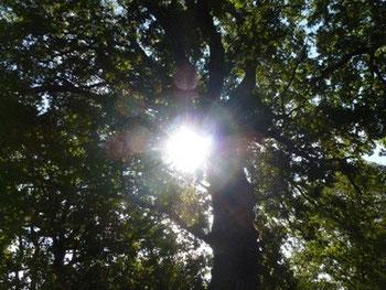 Bild Sonne und Bäume