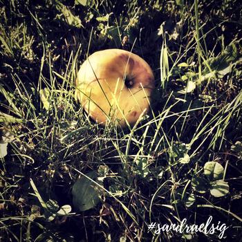 Dieser Apfel kann DIE Chance im JETZT sein.
