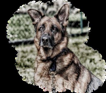 Schäferhund Rettung e. V.