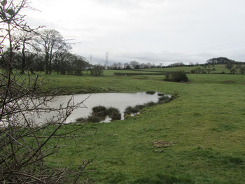 The remains of the moat of Frankley Hall