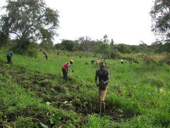 Sarchiatura in altra parte della piantagione verso la metà di settembre 2013. Vi lavoravano 70 operai