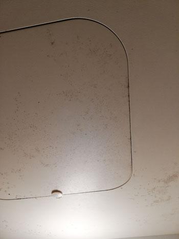浴室の天井にカビがびっしりと発生している様子の写真