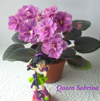 Queen Sabrina (Sorano)