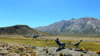 Besuch von Guanacas im Nationapark Perito Moreno