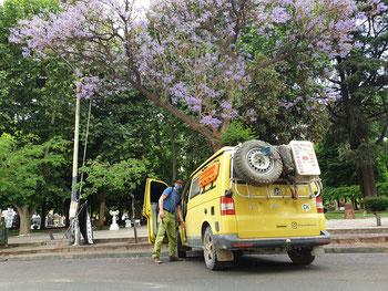 Plaza Principal in Chilecito: der Frühling ist da