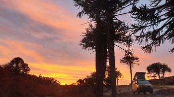 Sonnenaufgang in einem Araukarienwald an der Ruta 23