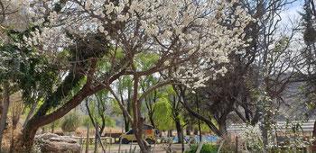 Frühlingsanfang in Südamerika