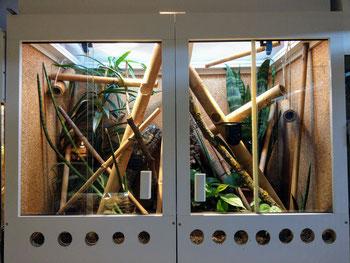 Phelsuma pusilla pusilla terrarium