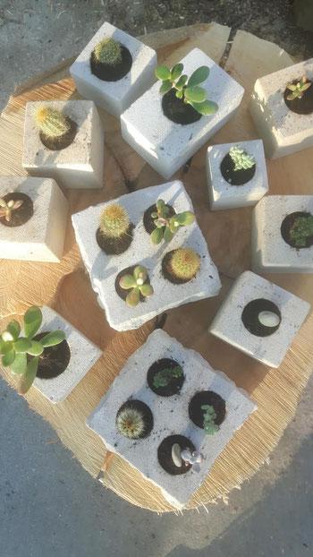 Sukkulenten in Pflanzsteinen aus Naturstein