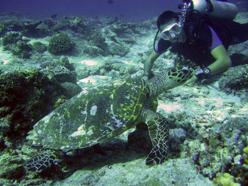 The diving on the Gilis is fun, at least it is if you love turtles and who doesn't?