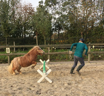Weerbaarheidstraining met paard Alexandra - Animal Assisted Coaching