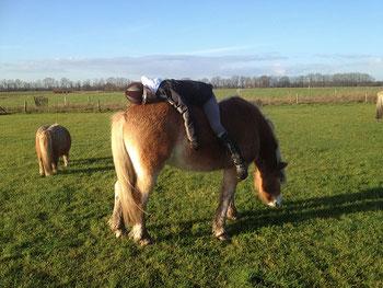 Begeleiding met paard