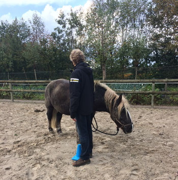 Traumaverwerking met paard Alexandra - Animal Assisted coaching