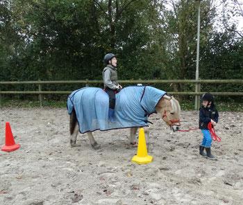 Samenwerking leren met het paard Alexandra - Animal Assisted Coaching
