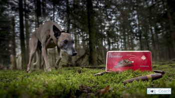 Dog Escape Forest workshops met honden activiteiten dog coach