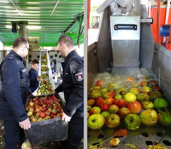 Die Äpfel werden der Presse zugeführt und gewaschen