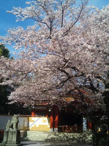 東京都品川区旗の台3-6-25メゾンそら105・さいとう整体/笑文字・なまえもじ かたこり・腰痛・骨盤矯正
