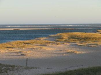 Chatham mit Kegelrobben auf der Sandbank