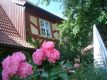 Maxi Vita Rose