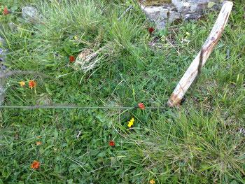 Zelt Hering Nagel Holz Wiese Blumen Vent Alpen Österreich E5 Zwieselstein Sonneck