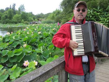 Bambusrunde-Präsident Dr. Gerd Boesken mit seiner Quetschkommode vor den Lotosblüten im Arboretum