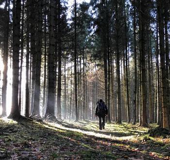 Waldweg im Hemhofer Holz
