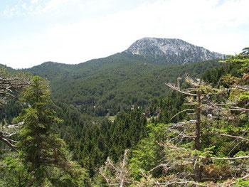 Vasiliki Forest