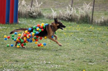 club canin montelimar