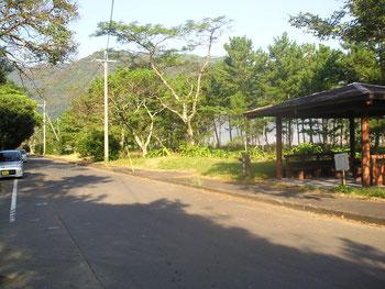 蒲江波当津海岸の松林。