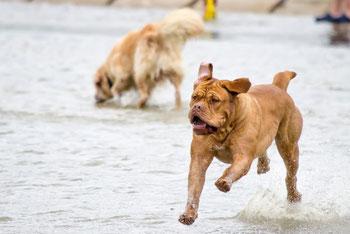 Hüftdysplasie HD Hund Aktivität