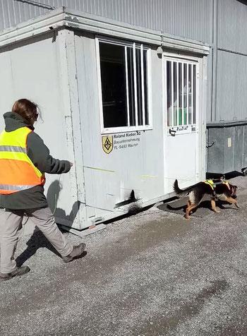 Luzia und Hund Bugs beim Mantrailing