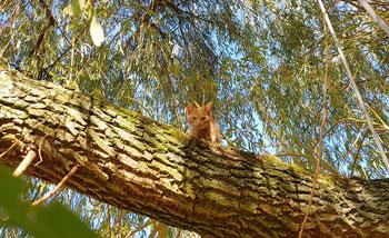 """""""Tiger"""" im Baum"""