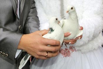 weißes Taubenpaar für Braut und Bräutigam