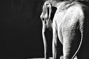 Trauriger Elefant