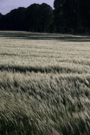 Alte Objektive an Digitalkameras: Traumhafte Bokeh-Bildwirkung des Triotar 4/13,5 cm an Nikon Z7. Foto: bonnescape.de