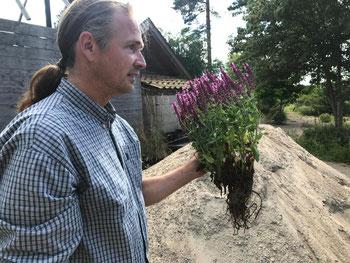 Peter Korn ist der Star unter den schwedischen Staudengärtnern.