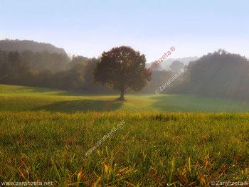 Kunst und Natur mit Wunschbaum im Nebel