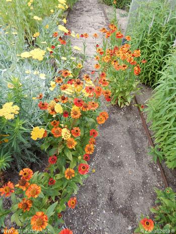 Garten mit orangen und gelben Blumen