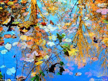 Bunte Farben im Herbst mit Laub und Wasser