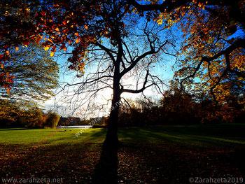 Herbststimmung im Stadtpark mit fast kahlem Baum in der Abenddämmerung