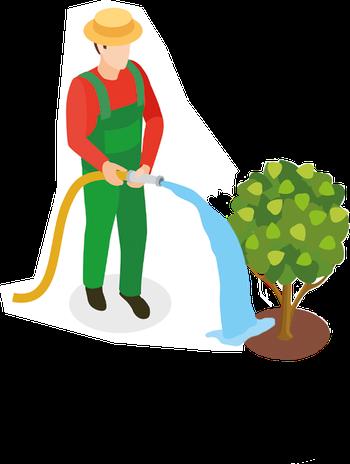 Baum einpflanzen, wie pflegen, wie viel Wasser, düngen, Würzburg, Unterfranken, baumschule