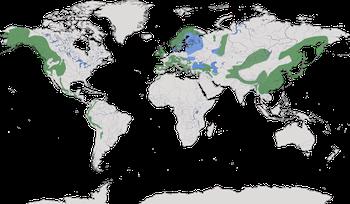 Karte zur Verbreitung der Familie der Wasseramseln.