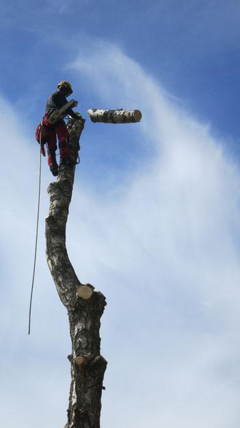 BaumService Lehmer schneidet Baum
