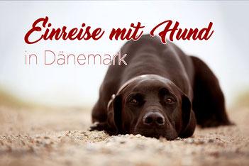 Einreise mit Hund in Dänemark_Urlaub_Bestimmungen