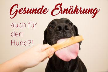 Hund_Ernährung_Futter_gesund