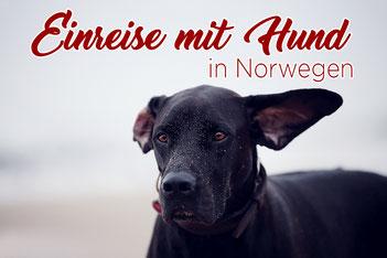 Norwegen_Hund_Einreise_Bestimmungen_Impfungen