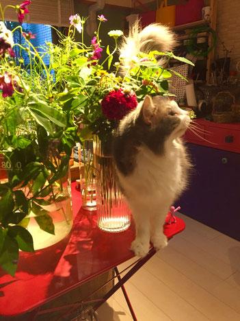 オーガニックフラワーと板ネコ