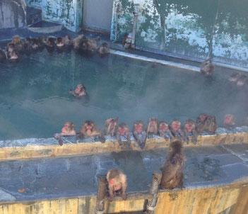 今朝娘からこの写真送られてきました。北海道のお猿さん、みんな半身浴してるでしょ。ちゃんと腕は外に出して〜。見てるだけで温まりそうです♡