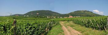 Que faire à Colmar ? domaine viticole de la ville de Colmar