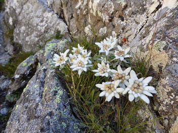 Petite pause florale (#edelweiss)